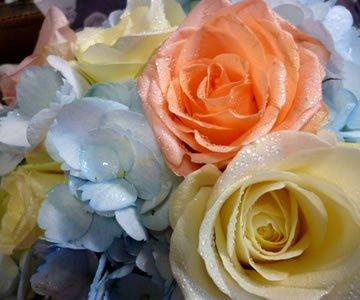 Flowers Newton Stewart